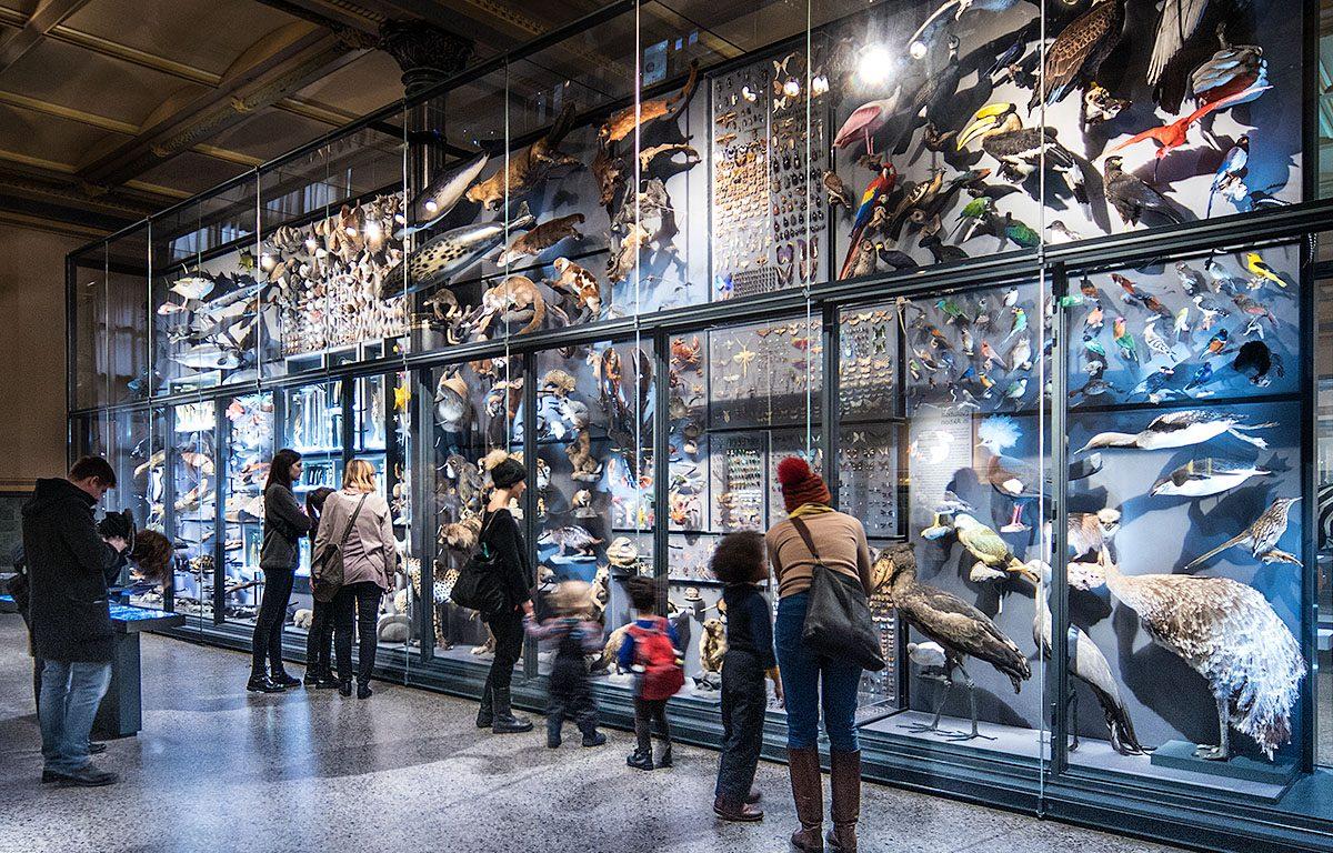Besucher im Naturkundemuseum Berlin - Biodiversitätswand Evolutionssaal