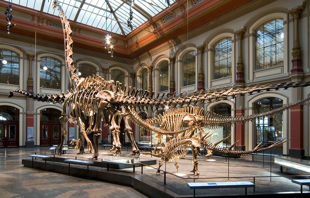 Museum für Naturkunde Berlin - Sauriersaal ©Carola-Radke-MfN